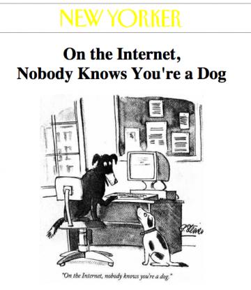 chiens bloggueurs